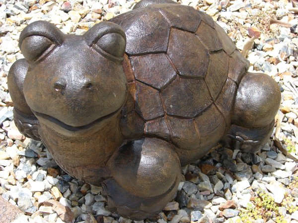 Goofy Turtle (click to enlarge)
